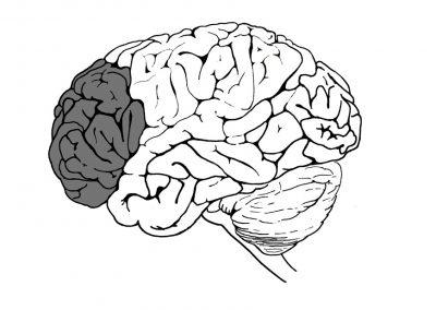 hersenen-zijaanzicht-prefrontale-cortex-aangepast